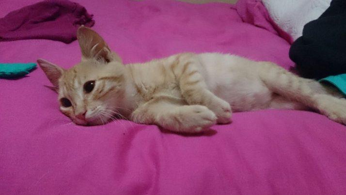 Ayuda urgente para Gato López