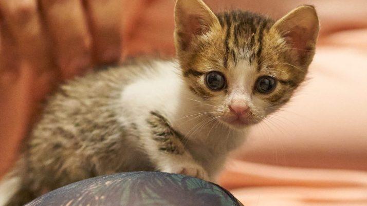Luli preciosa princesa en adopcion con gemelo incluido