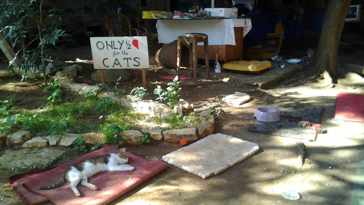 Gatos por el mundo: Croacia