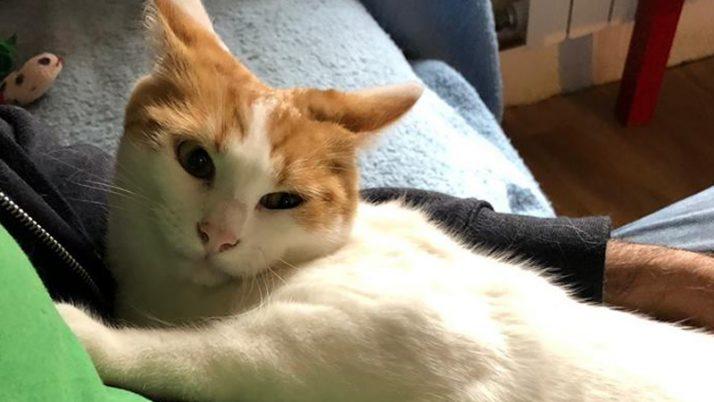 Atila, gato en adopción