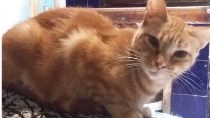 Eva, preciosa tigrecita en adopción