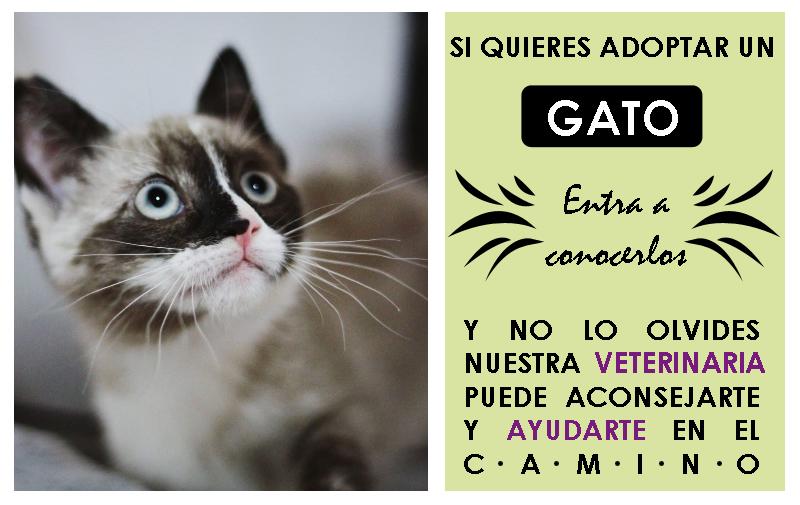 ver gatos en adopción