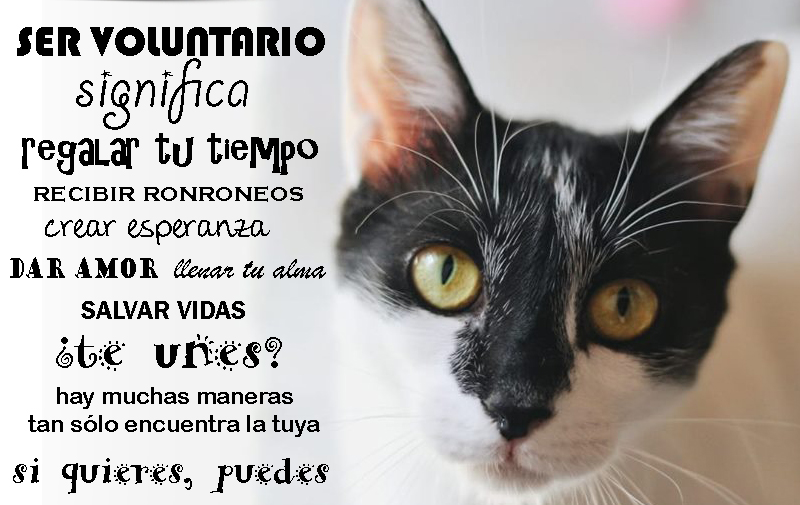 voluntariado animales