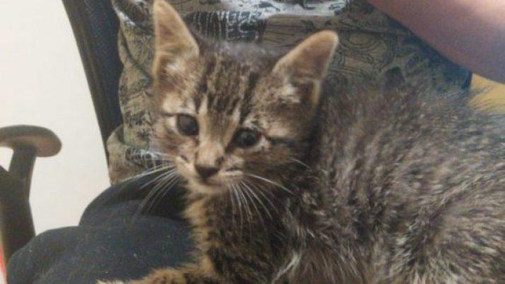 Tipy, gatito en adopción deshauciado por las autoridades con apenas 4 semanas de vida