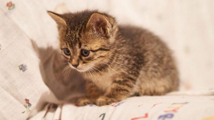 Esther, valiente gatita en adopción