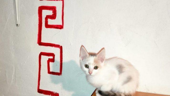 Eira preciosa gatita calico en adopción