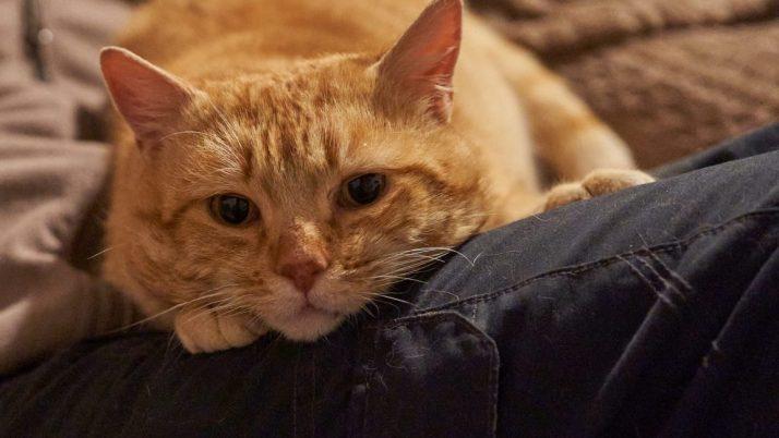 Gaby, precioso gato abandonado en adopción